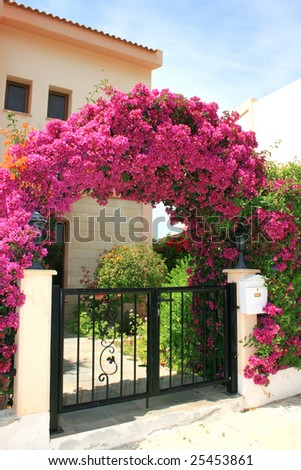 Pink flowers arch at the house.