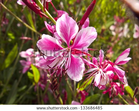 Pink flowers at the garden, in spring - stock photo