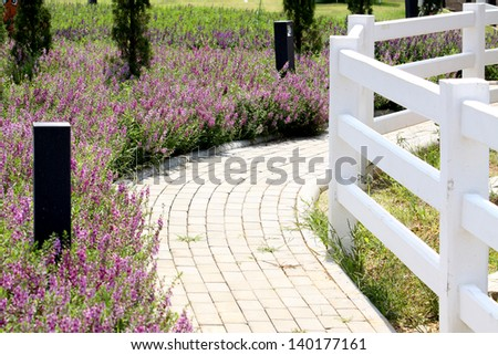 Pink Flowers field & white fence - stock photo