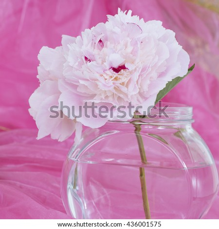 Pink Flowers in a glass vase, isolated against dark pink - stock photo