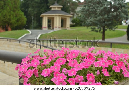 Pink flowers in blossom with wooden gazebo in a public park