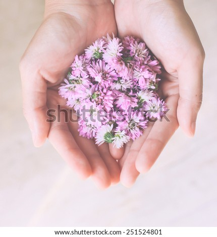 Pink flowers in hands with retro filter effect - stock photo