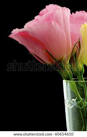pink flowers in wine glass closeup - stock photo