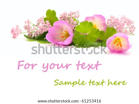 Pink flowers isolated on white with copy space - stock photo