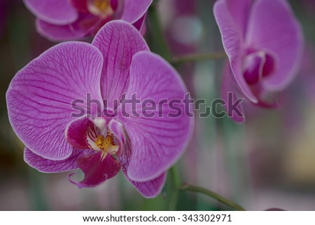 pink flowers of an orchid
