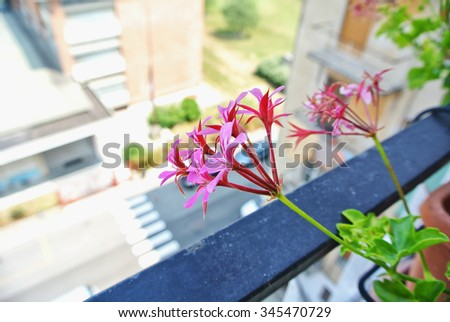 Pink flowers on a balcony, horizontal image - stock photo