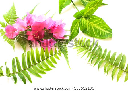 Pink flowers on fern leaf isolated white background. - stock photo