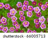 Pink flowers on grass background - stock photo
