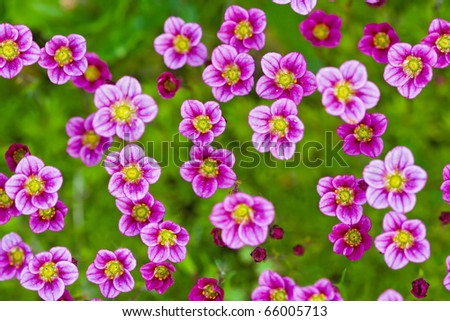 Pink flowers on grass background