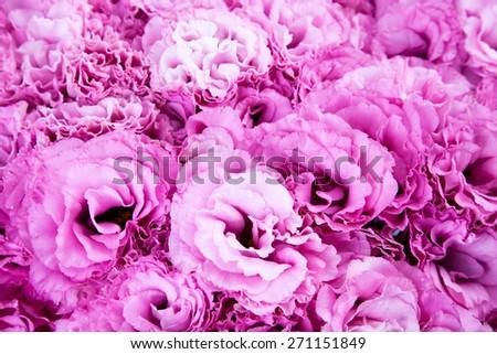 pink flowers/ pink flowers/ pink flowers - stock photo