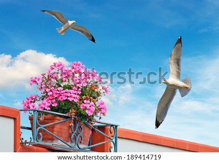 pink flowers under a blue sky with seagulls - stock photo