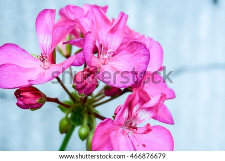 Pink flowers with a blurred background behind.