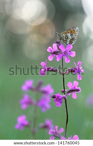 Pink flowers with e butterfly - stock photo