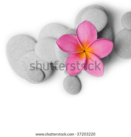 Pink Frangipani flower and white pebbles from above - stock photo