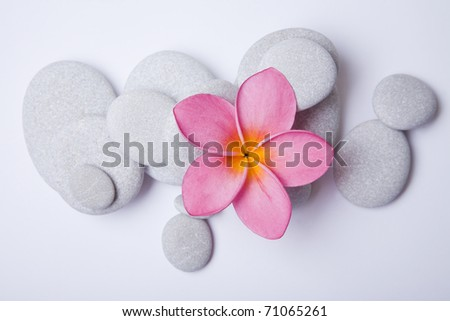 Pink frangipani flower and white pebbles. High key zen. - stock photo