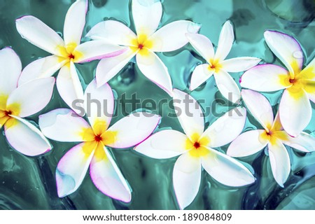 Pink frangipani spa flowers over shiny water background-14 - stock photo