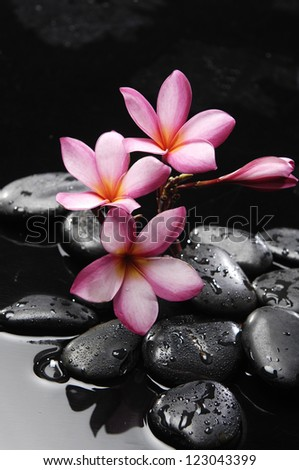 Pink frangipani with zen stones