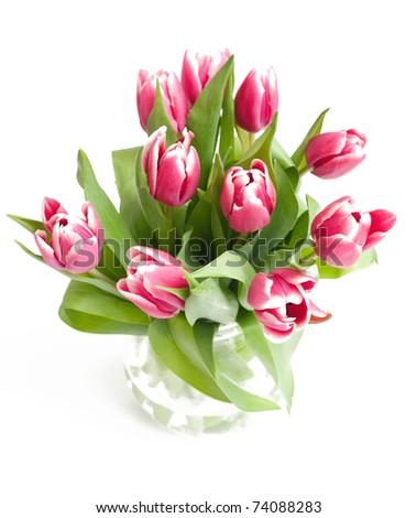 pink fresh tulips on white background - stock photo
