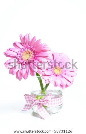 Pink gerber flower - stock photo