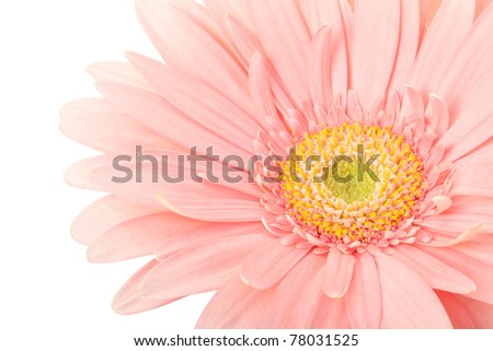 Pink gerber flower border isolated on white, clipping path included - stock photo