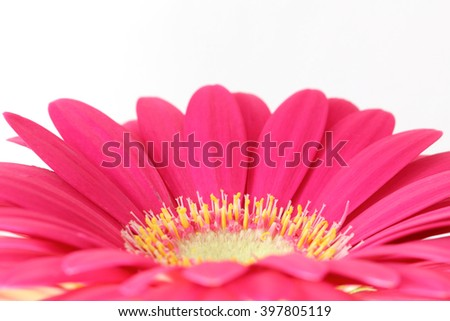 Pink gerber flower on light background with space for text - stock photo