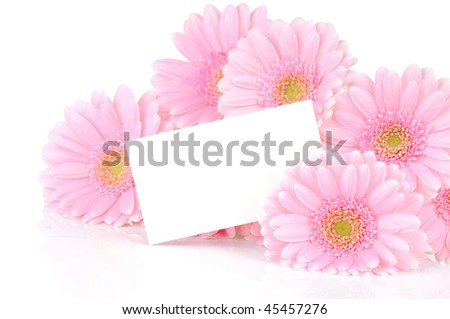 Pink gerber flowers isolated on white background - stock photo