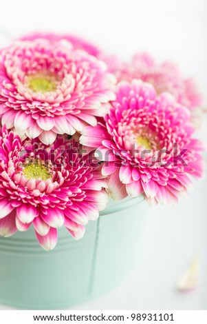 Pink Gerbera Flowers in a Pot - stock photo