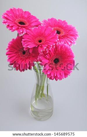 Pink Gerbera Flowers in vase  - stock photo
