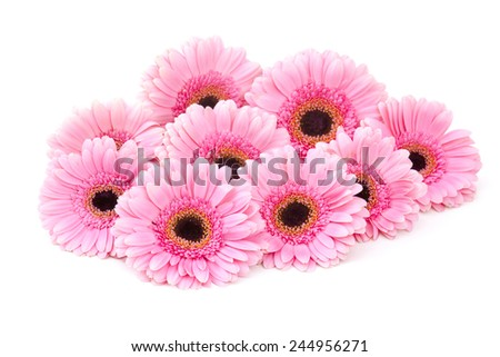pink gerbera flowers on white background - stock photo