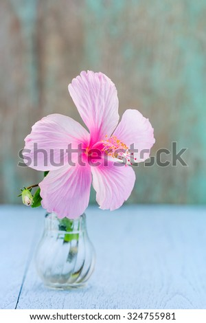 Pink hibiscus flower in glass bottle on blue table - stock photo