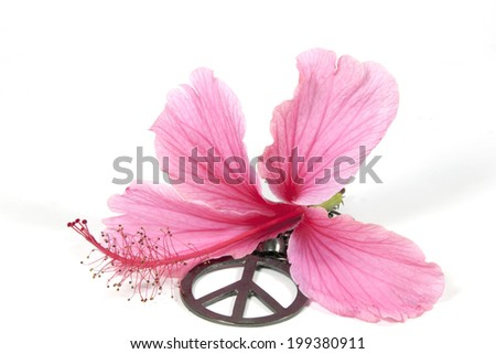 pink hibiscus flower with silver 1960's peace pendant as symbol of hippe movement - stock photo