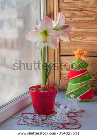 Pink hippeastrum on  the window with frosty patterns. Eve Advent - stock photo
