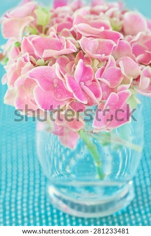 Pink hydrangea flowers in a vase on a blue background .  - stock photo