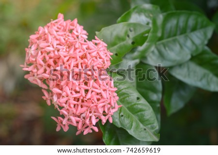 List of synonyms and antonyms of the word spike flowers flower spike stock images royalty free images vectors mightylinksfo Image collections