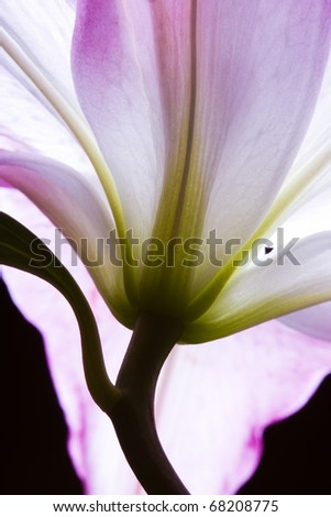 Pink lilies on abstract background - stock photo