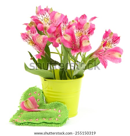 Pink lily flowers in a bucket and cushion-heart isolated on white background. - stock photo