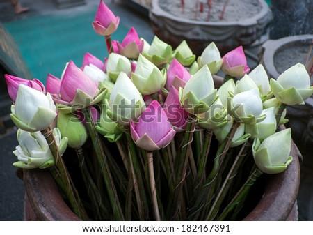 Pink lotus and white lotus  for worship buddha - stock photo