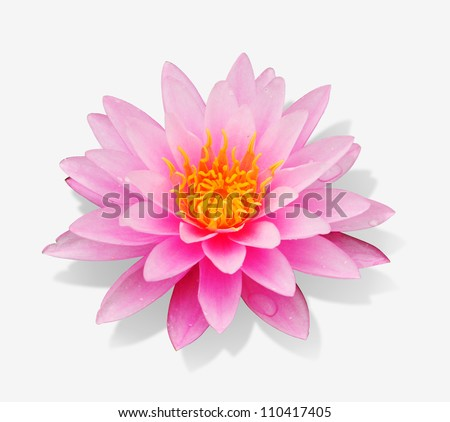Pink lotus blossoms on white background with clipping path - stock photo