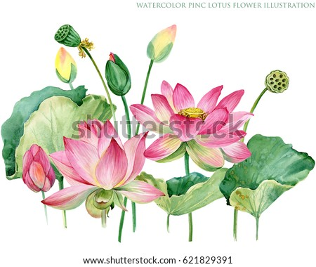 Pink lotus border watercolor botanical illustration stock pink lotus border watercolor botanical illustration mightylinksfo