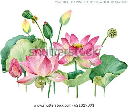 ดอกบัว ภาพสต็อก ภาพและเวกเตอร์ปลอดค่าลิขสิทธิ์ | Shutterstock