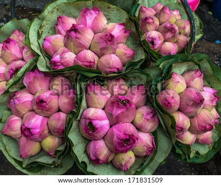 Pink Lotus Bud background at Bangkok Thailand Flower Market  - stock photo