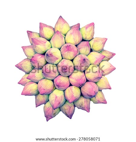 pink lotus bud on white background - stock photo