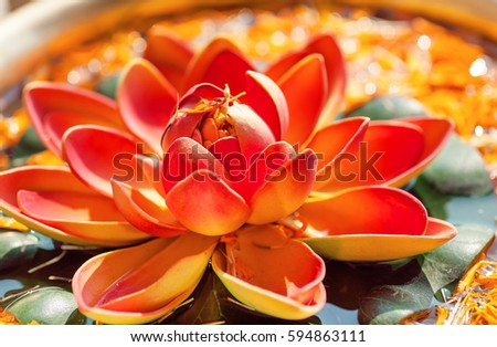 Pink lotus flower bowl fresh water stock photo royalty free pink lotus flower in bowl with fresh water sacred plant in hinduism and buddhism mightylinksfo
