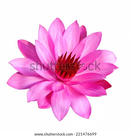 Pink Lotus flower isolated on white background. - stock photo
