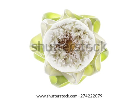 Pink lotus flower on light gray background
