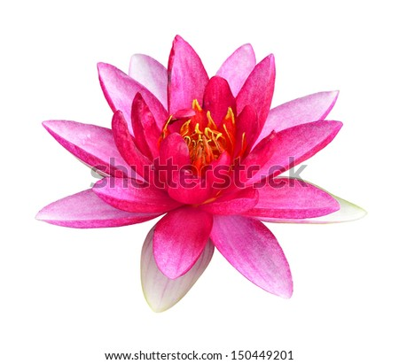 Pink Lotus flower or Waterlily isolated on white background - stock photo