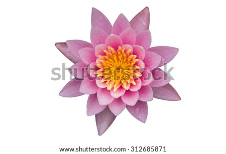 Pink lotus flowers blooming on pond - stock photo