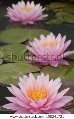 Pink lotus in pool, lotus is logo of spa and buddhism in asia. - stock photo