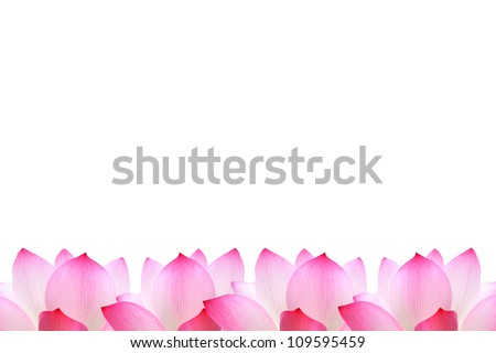 Pink lotus isolated on a white background - stock photo