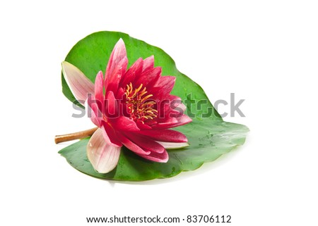 pink lotus on a leaf on white background - stock photo